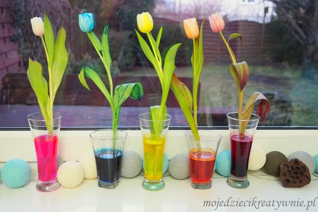 barwienie kwiatów