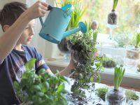 ogrodek na twoim oknie moje dzieci kreatywnie blog parentingowy