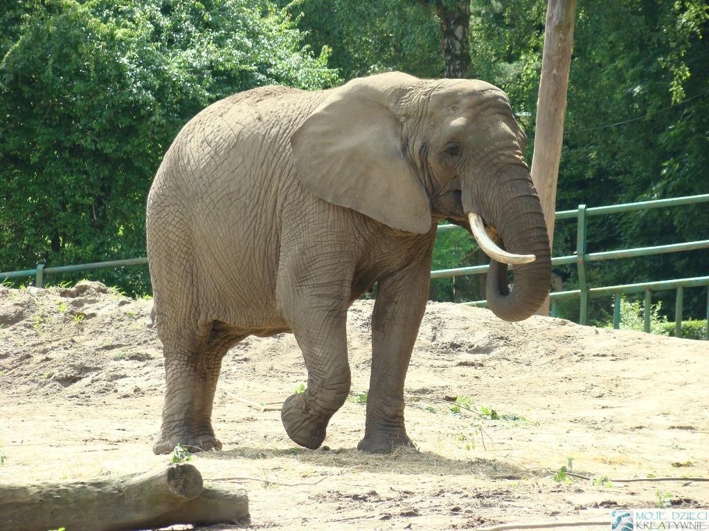 zoo gdansk