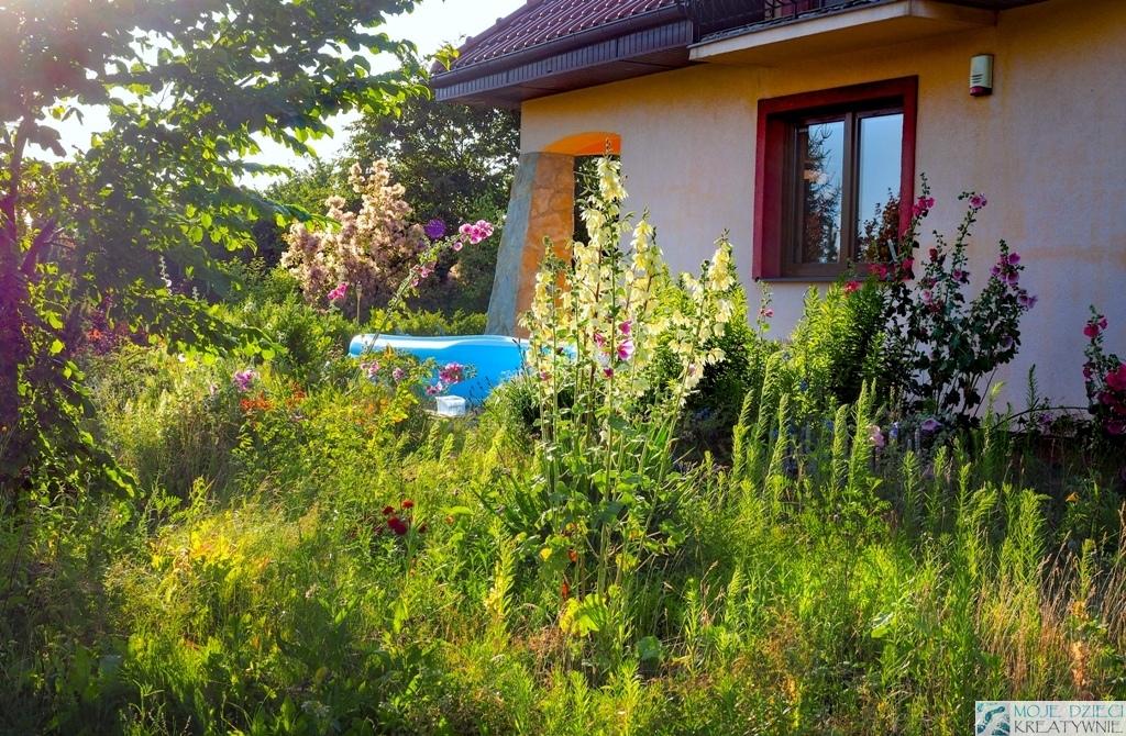 jakie kwiaty do ogrodu na wsi