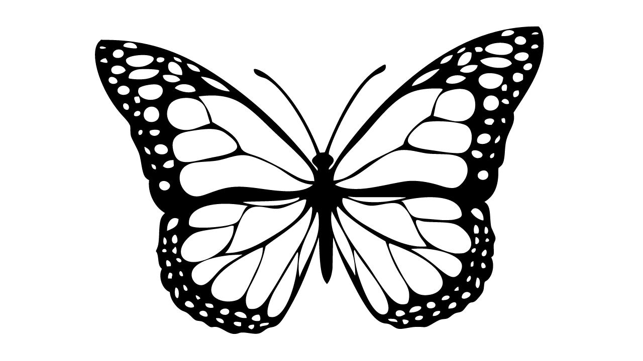 motyl kolorowanka i szablon do wydruku za darmo